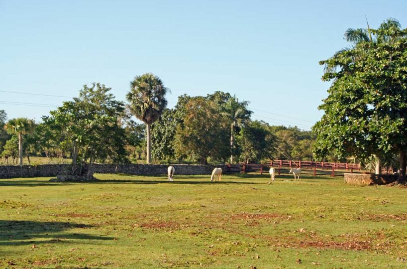 Sea Horse Ranch Equestrian