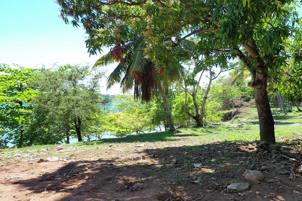 rio-los-cocos-mango-tree