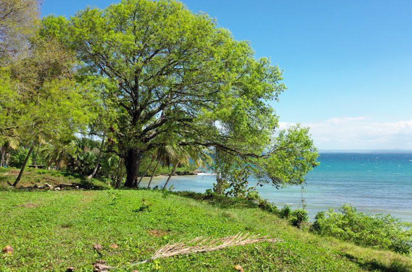 rio-los-cocos-development-tree