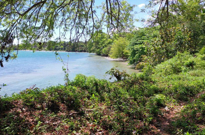 rio-los-cocos-development-land-beach-trees