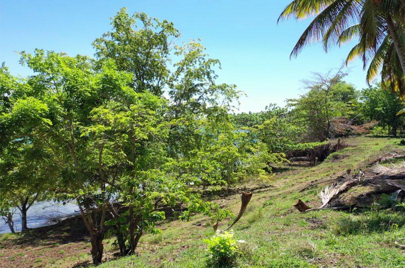 rio-los-cocos-development-land-trees