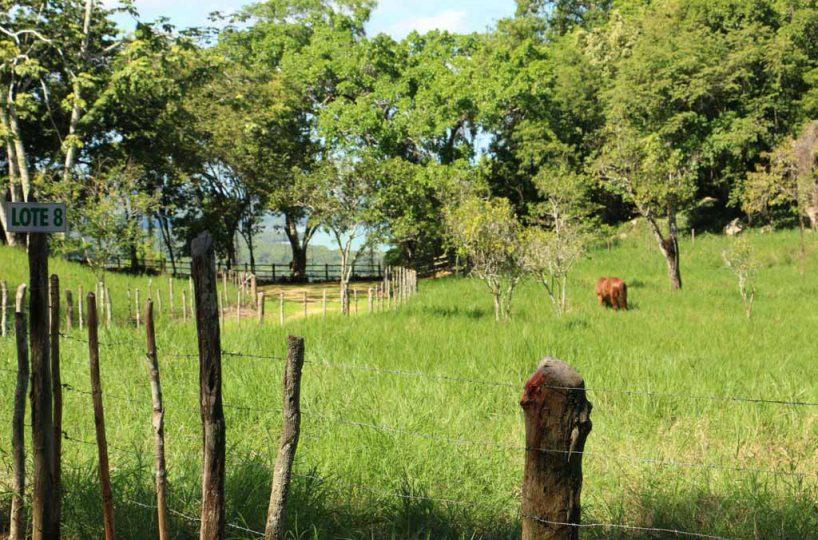 Rancho-Santuario-Horse-Grazing