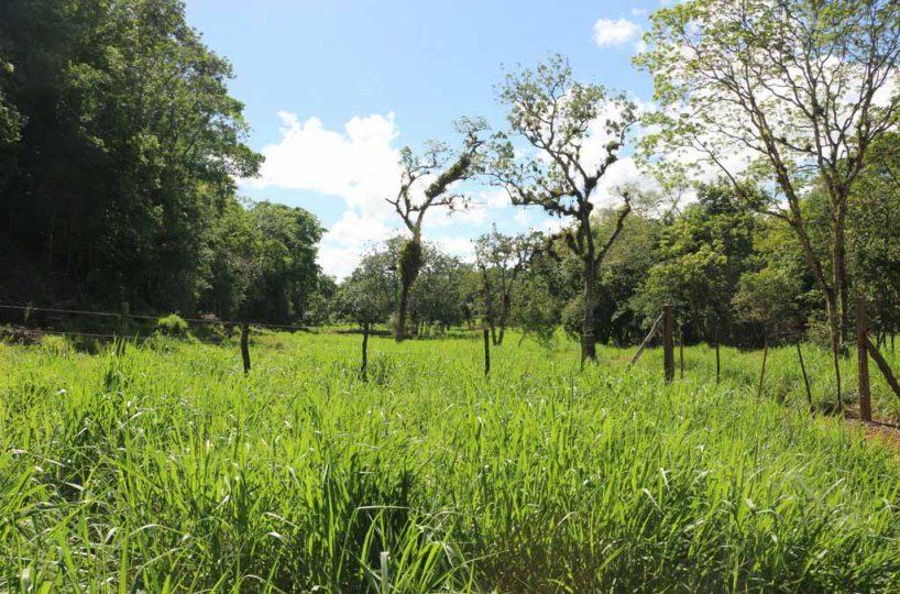 Rancho-Santuario-Meadow-View