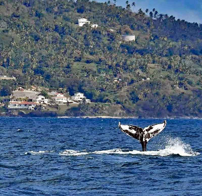 Whale Watching at Samana Bay Residences